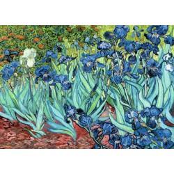 Van Gogh: Iris