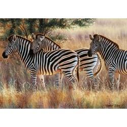 Cebras