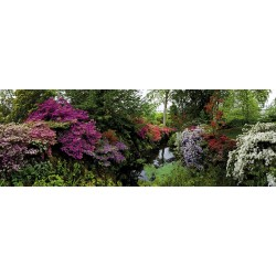 El Gran Jardín
