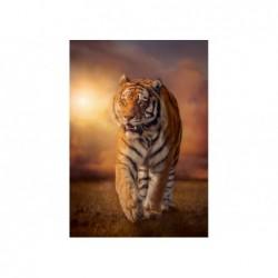 Tigre Al Atardecer