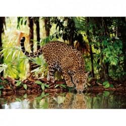 Leopardo en la Jungla