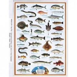 Peces del Mar