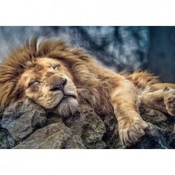 León Durmiendo