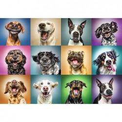 Retratos de Perros Graciosos