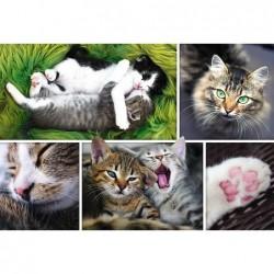 Collage de Gatos