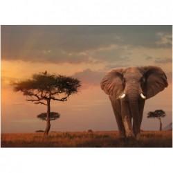 Elefante en el parque...